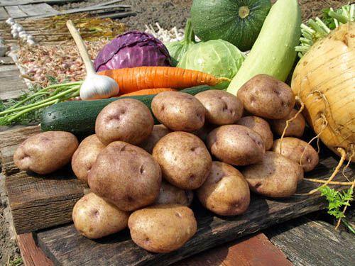 В Курской области подешевели овощи